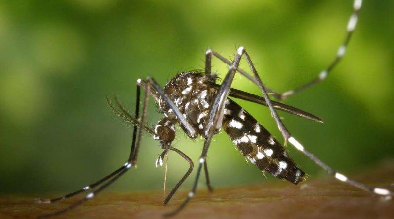Alerte aux moustiques tigre dans la Nièvre
